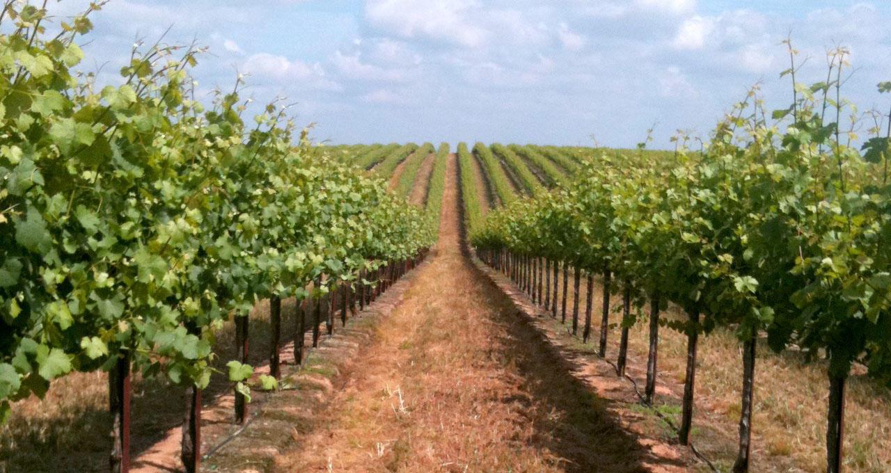 bronco_wine_company_02.jpg