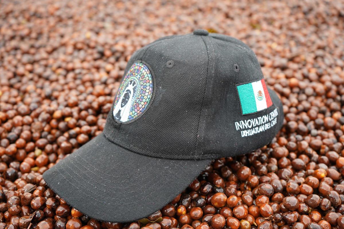 コーヒーの旅_メキシコ_サントゥアリオプロジェクトイノベーションセンター